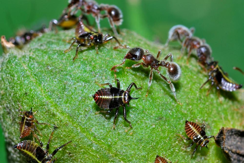 Reliant Pest Gallery